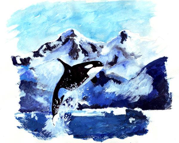 Orcinus Orca by venatorfend
