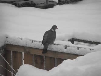 Snow Bird by regansart
