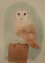Barn Owl by braelia