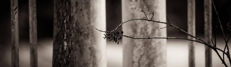 untitled by nekrep