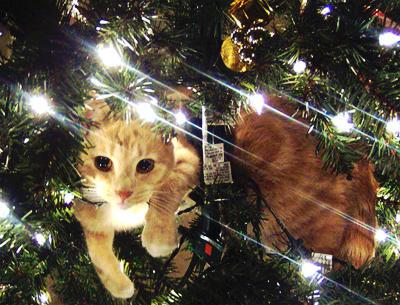 cat in tree