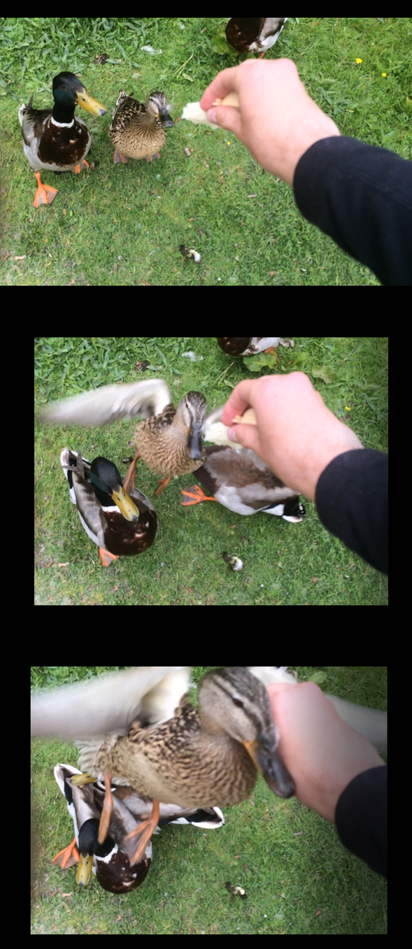 Duck Attack! by Enricthepenguin92