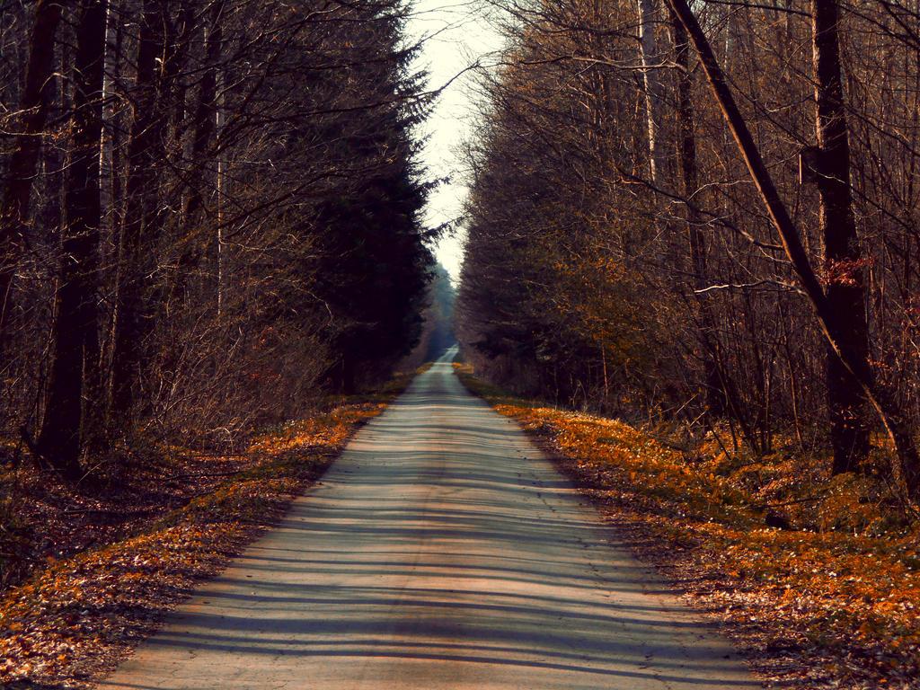 Follow Me by melodyphantom