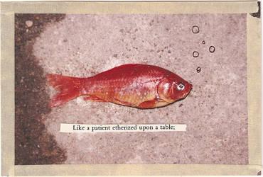goldfish by wakeuposleeper