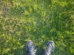 24/06/2011 - Flower Field 01