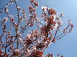 27/03/2011 - Plum Tree