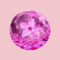12 Full Moons 2018 - April - Pink Moon