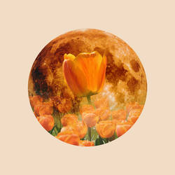 12 Full Moons 2018 - May - Flower Moon by Loupii