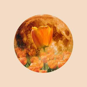 12 Full Moons 2018 - May - Flower Moon