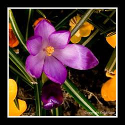 little flower by erikalr