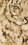 Quick Tiger Sketch
