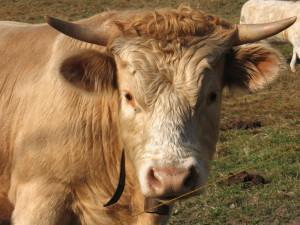BellJorienViola's Profile Picture