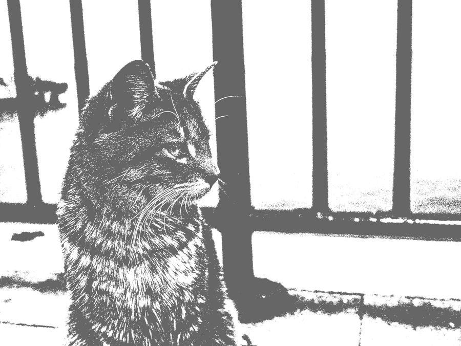 50 shades of cat by natchnionaMS