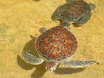 Sea Turtels I