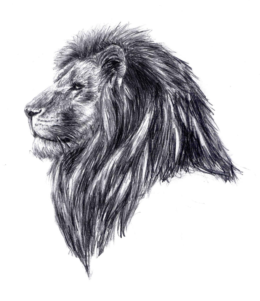 how to draw a lion face realistic