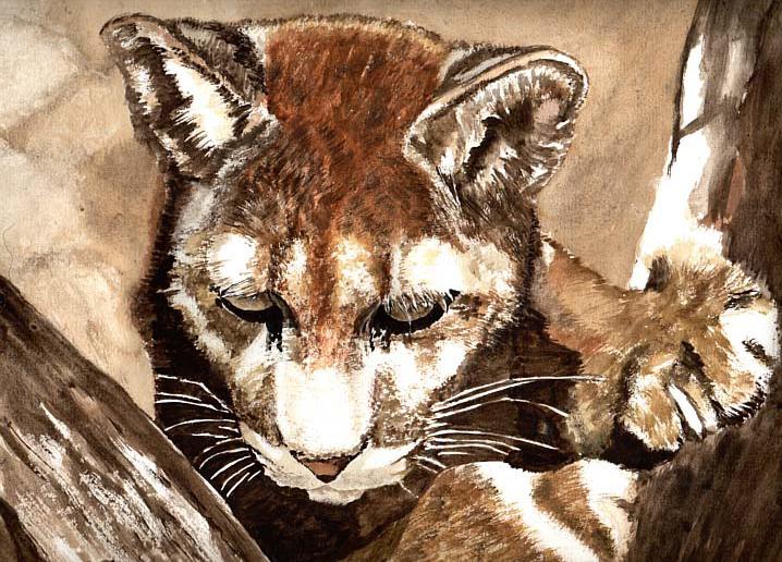 The Puma by Cyb007