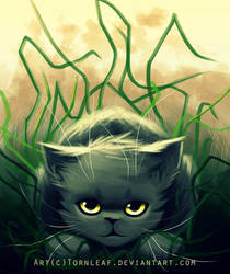 Graystripe by Akonis