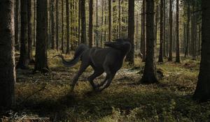 Dark Woods by russellskiy