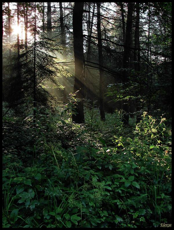 Sunlight by Elenya-Noldo