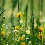 Down deep in the grass by Elenya-Noldo