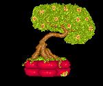 Bonsai by Soozan