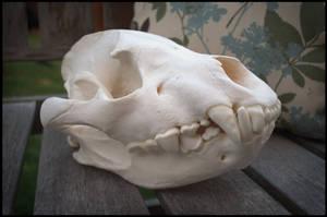 Hyena Skull by Lupen202