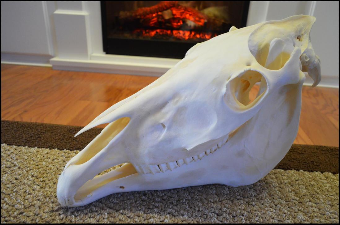 Horse Skull by Lupen202