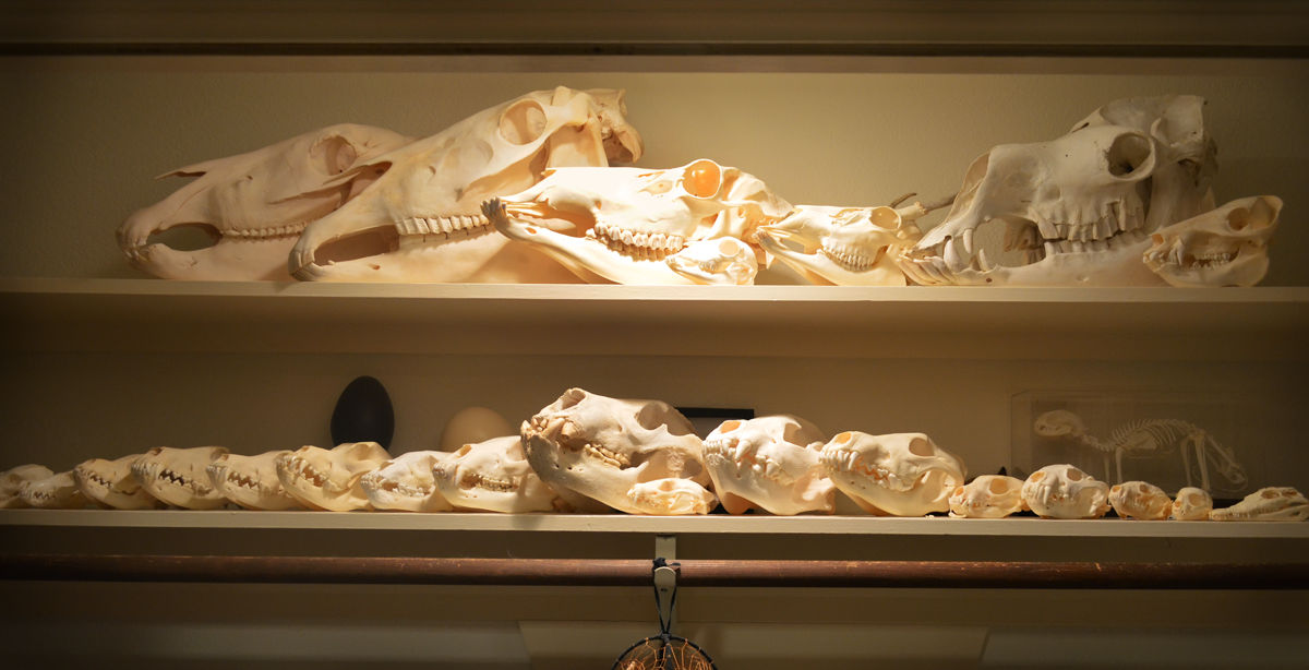 Skull Collection Update