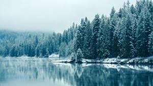 Light of winter