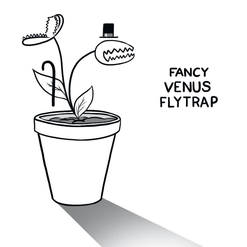 Fancy Venus Flytrap by arseniic