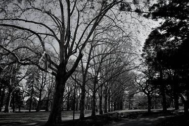 Carlton Gardens by beckenslobber