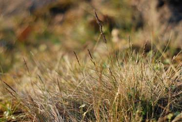 Grass of Valaam