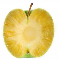 Apple What? by skronlage