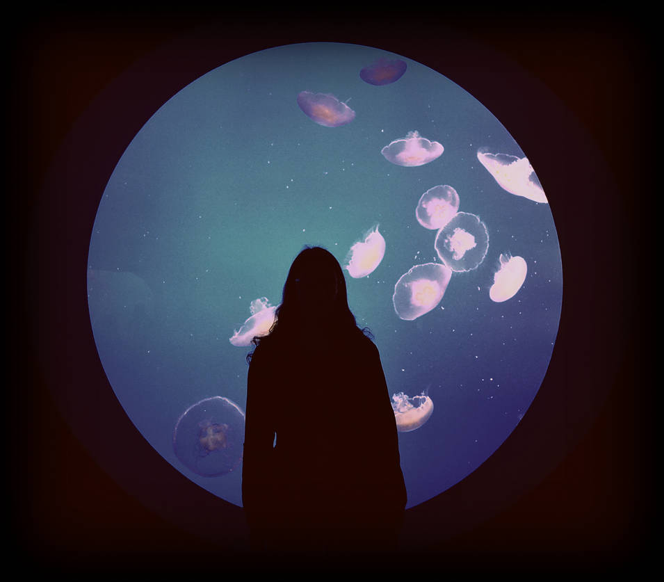 Framed by Moon Jellies
