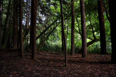 Forest by emmasea