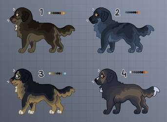 [OPEN] Dog Adopts