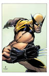 John Timms/Tim Townsend Wolverine Colors