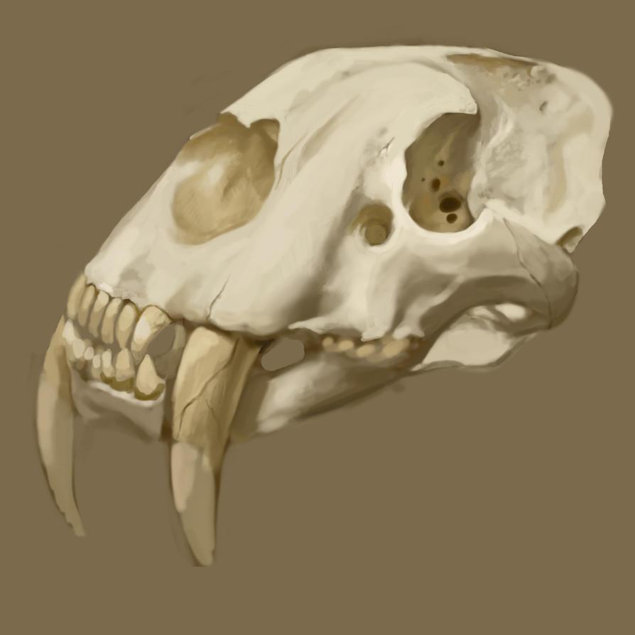 [Image: skull_wip_by_mahons-d4n2jcf.jpg]