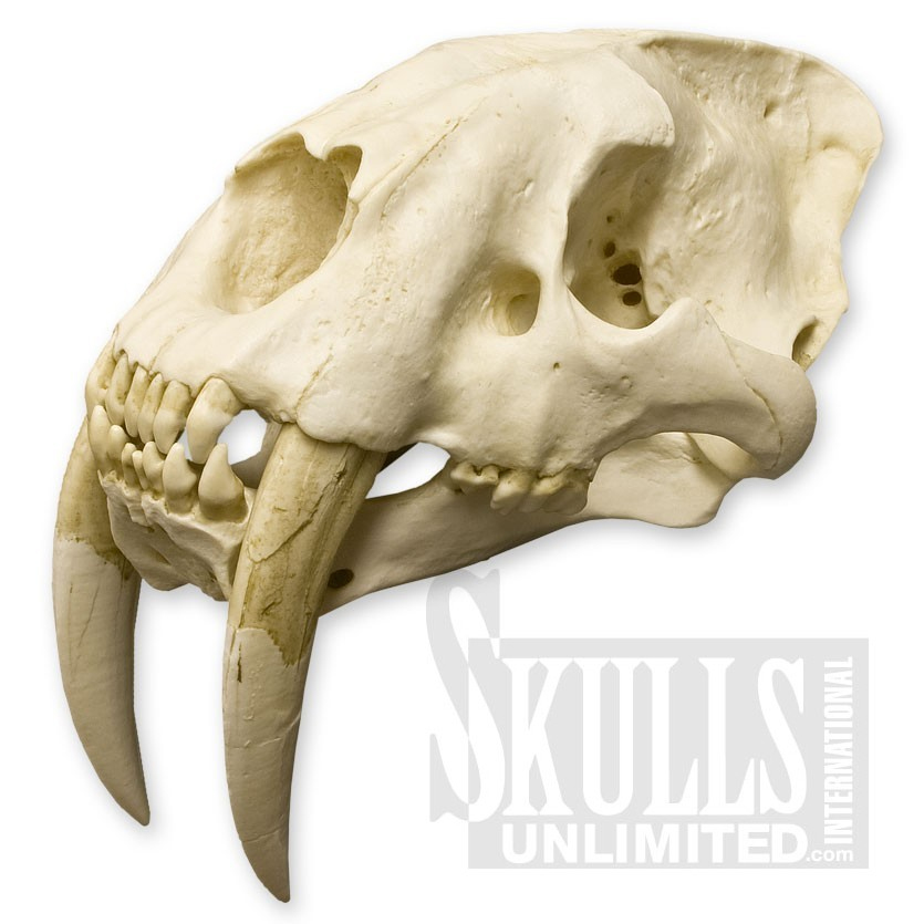[Image: skull_ref_by_mahons-d4n2jkq.jpg]