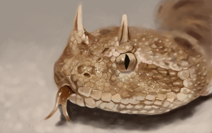 [Image: snake_study_by_mahons-d4pyo2s.jpg]