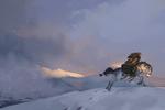 Outrun a Blizzard