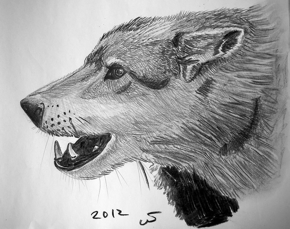 Wolf study by ShadeOvWarlock