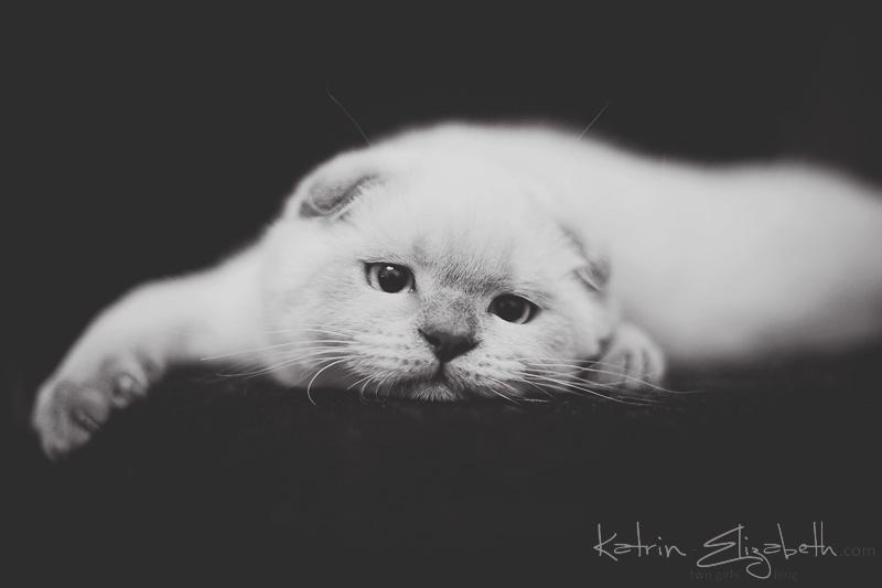 Dreamer by Katrin-Elizabeth