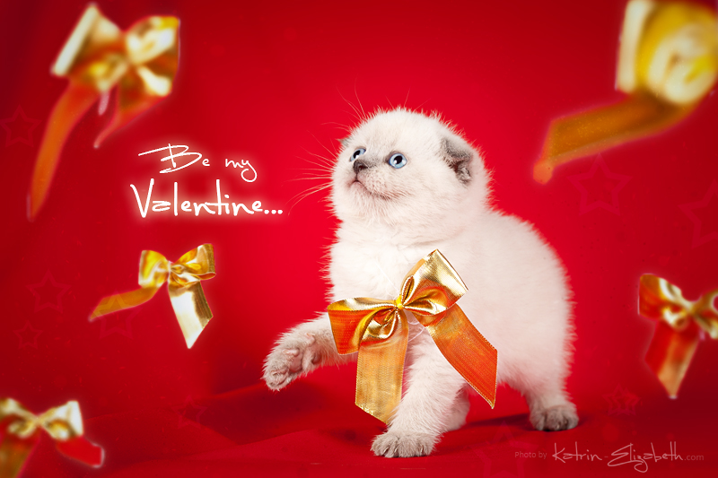 Be my Valentine! by Katrin-Elizabeth
