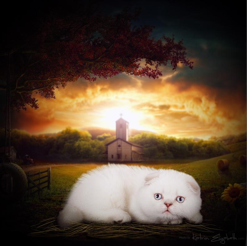 Fairy tale:) by Katrin-Elizabeth