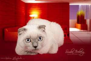 Cat and interior #2 by Katrin-Elizabeth