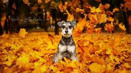 Autumn sketch by Katrin-Elizabeth