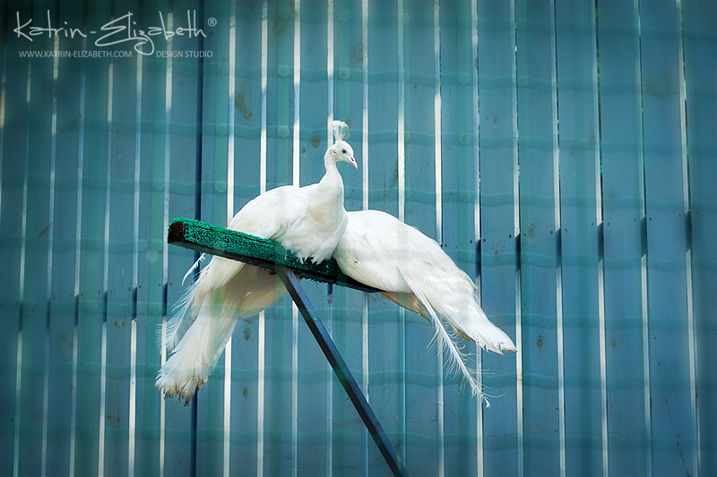 Kiev Zoo by Katrin-Elizabeth