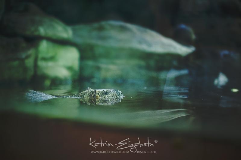 Kiev Zoo 3 by Katrin-Elizabeth