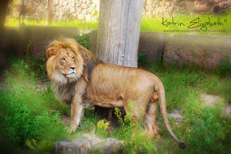 Kiev Zoo 4 by Katrin-Elizabeth
